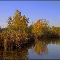 У осеннего пруда :: Вячеслав Минаев