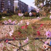Городские цветы :: Татьяна Ломтева