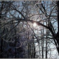 Снежное убранство :: Андрей Заломленков