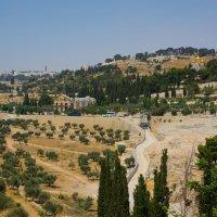 Иерусалим. Вид на Масличную гору и Гефсиманию. :: Игорь Герман