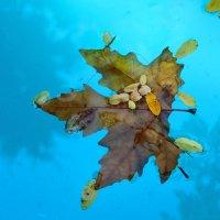 Осенний лист в фонтане :: Светлана