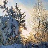 Зима :: Павлова Татьяна Павлова