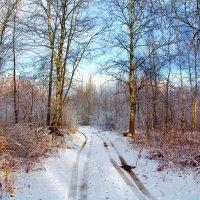 По первому снегу :: Вячеслав Минаев