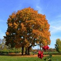 Осень в Тарханах :: Вера
