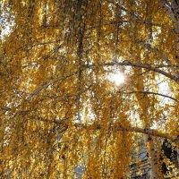 солнце золотое :: Василиса