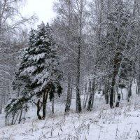 Зима пришла 2 :: aksakal88