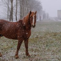 Под первым снегом одиноко... :: Анатолий Клепешнёв