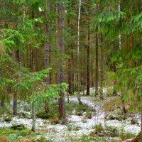 Лес в ожидании зимы :: Милешкин Владимир Алексеевич