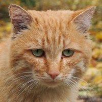 Эти грустные,зелёные глаза... :: Александр Попов