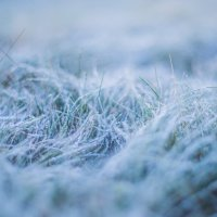 морозное утро :: Мария Корнилова