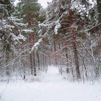 Начало зимы :: натальябонд бондаренко