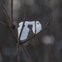 Природный алфавит :: marmorozov Морозова