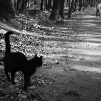 Про черного кота :: Лидия Цапко