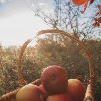 Наливные яблочки :: Алена Лебедева