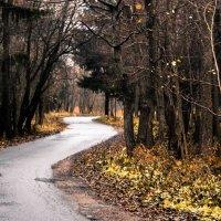 Сестрорецкий лес :: Молодой Человек