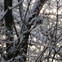 Снег на деревьях :: Валюша Черкасова