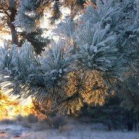 Зимним утром :: Павлова Татьяна Павлова