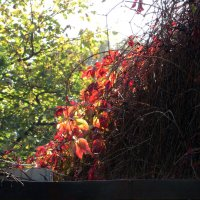 Красивая осень :: Наталья (D.Nat@lia)