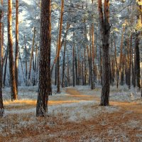 Морозцем лёгким иней лёг... :: Лесо-Вед (Баранов)