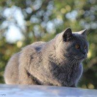 Cat :: Мари Шмакова