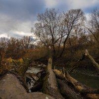 На заброшенных берегах Нары :: Zifa Dimitrieva