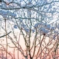 Зонтики под снегом.. :: Юрий Стародубцев