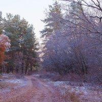 Зима приходит в лес.. :: Юрий Стародубцев