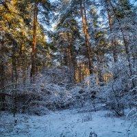 Конец ноября :: Андрей Дворников