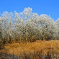 Иней на деревьях в городском парке :: Милешкин Владимир Алексеевич