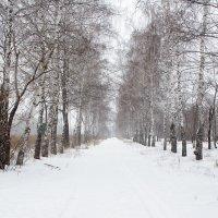 Березовая аллея в ноябре :: Игорь Ломакин
