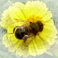 Пчела. :: Чария Зоя