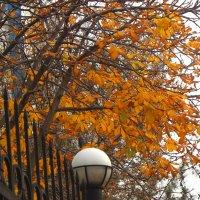Осенний каштан :: Светлана