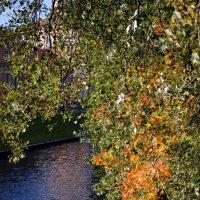 Это осень раскрасила листья :: Галина Galyazlatotsvet
