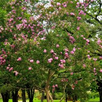 Цветущий сад в Абхазии :: Дмитрий Шатров