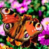 бабочка :: Андрей Машков