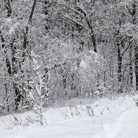 Все белым бело :: Лидия (naum.lidiya)