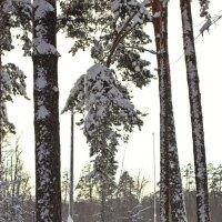 Отяжеленная снегом :: Лидия (naum.lidiya)
