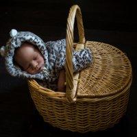спит барсук в своей норе.... и леопард тоже вздремнул) :: Мария Корнилова