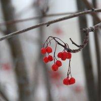 Зимние краски... :: Елена