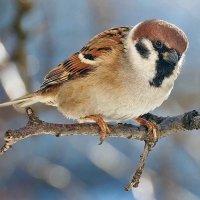 Кстати о птичках... Ну не павлин, но все же... :)) :: Александр Резуненко