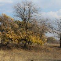 Настроение осень :: Надежда