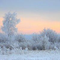 Зимний сон. :: nadyasilyuk Вознюк