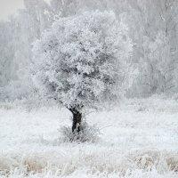 Снежная сказка. :: nadyasilyuk Вознюк