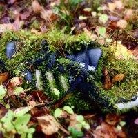 Находка в лесу :: KIRA Sm.