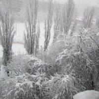 Белым-бело :: Самохвалова Зинаида