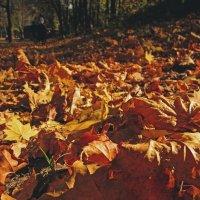 Осенний ковер :: Павел Зюзин