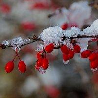 Первый снег. :: Leonid Volodko