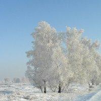 Заколдованный лес. :: nadyasilyuk Вознюк