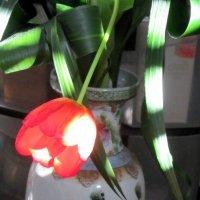 Тюльпан и утренний луч солнца :: Герович Лилия