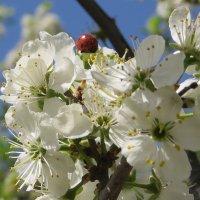 Это было весной :: Вера Щукина